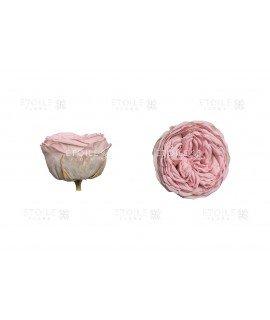 Роза Кабукиза светло розовая
