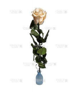 Роза на стебле премиум навал шампань