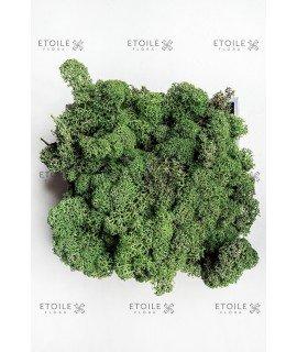 Ягель темно-зеленый