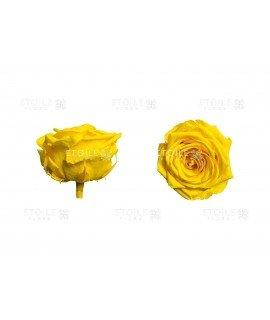 Роза премиум желтая