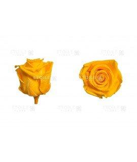 Роза стандарт желтая