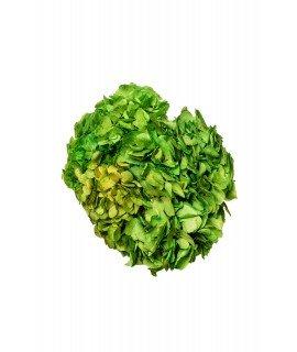 Гортензия стандарт зеленый