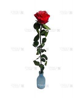 Роза на стебле премиум навал красная
