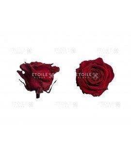 Роза премиум бордо