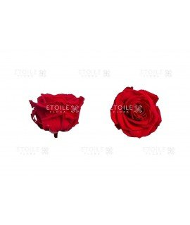 Роза премиум красная