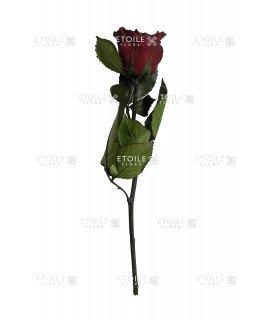 Роза в коробке на стебле шоколад