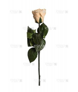 Роза в коробке на стебле цвета шампань
