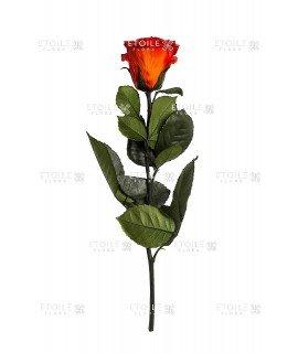 Роза в коробке на стебле алая
