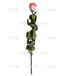 Роза в коробке на стебле коралловый