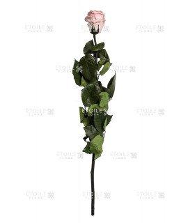 Роза в коробке на стебле бледно розовый