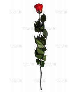 Роза в коробке на стебле алый