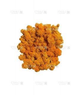 Ягель оранжевый