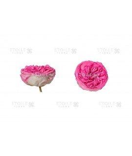 Роза Кабукиза розовая