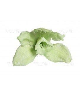 Орхидея Цимбидиум мятная