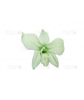Орхидея Дендробиум мятная