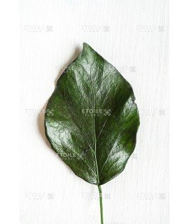 Хедера зеленая