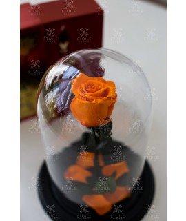 """Роза в колбе """"Оранжевый луч"""""""