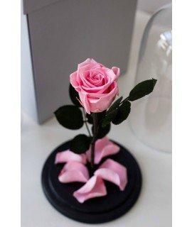 """Роза в колбе """"Невинный розовый"""""""