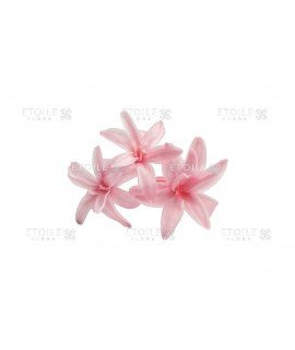 Тубероза розовая