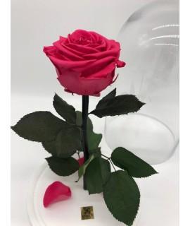 """Роза в колбе """"Малиновый поцелуй"""""""