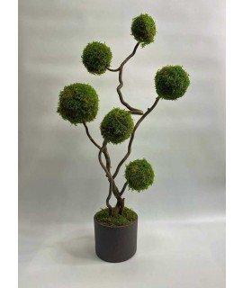 Дерево из плоского мха