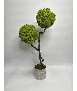 Дерево из мха в ассортименте