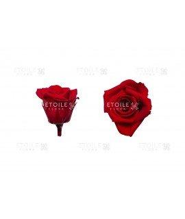 Роза мини красная
