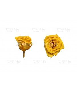 Роза мини горчичная