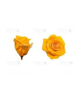 Роза мини ярко желтая