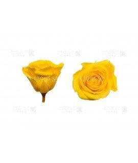 Роза мини светло желтая