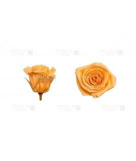 Роза мини персиковая
