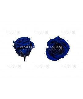Роза мини синяя
