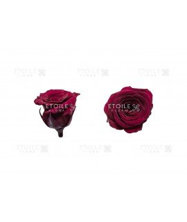 Роза принцесс темно сливовая