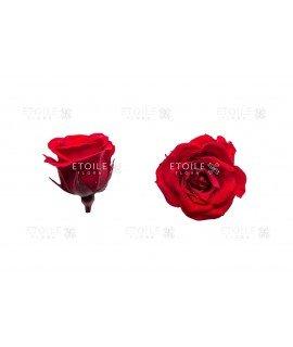 Роза принцесс красная