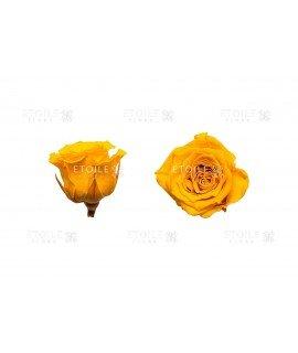 Роза принцесс желтая