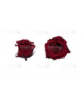 Роза стандарт бордо