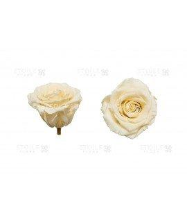 Роза стандарт кремовая