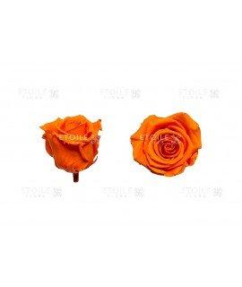 Роза стандарт оранжевая