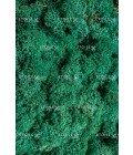 Ягель пасифик (лазурный зеленый) - Фото3