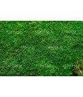 Плоский мох насыщенный зеленый - Фото5