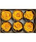 Роза стандарт желтая - Фото3