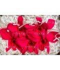 Орхидея Дендробиум малиновая - Фото2