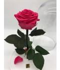 """Роза в колбе """"Малиновый поцелуй"""" - Фото3"""