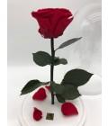 """Роза в колбе """"Красный закат"""" - Фото1"""