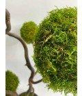 Дерево из плоского мха - Фото2