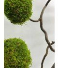 Дерево из плоского мха - Фото4