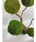 """Дерево """"5 Крон"""" - Фото3"""