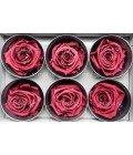 Роза стандарт крэнбери - Фото2