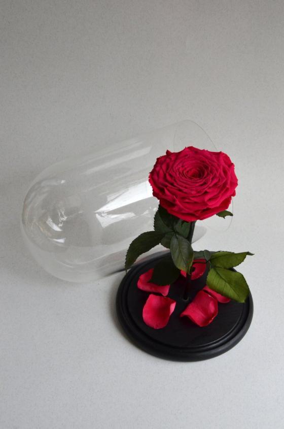 """Роза в колбе """"Вайра Мега Красный"""""""