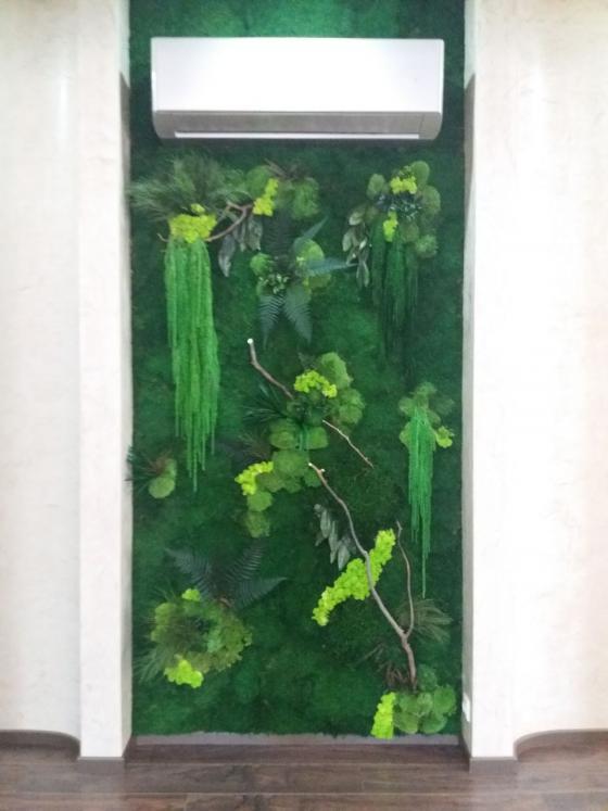 Стена из стабилизированных растений в дом